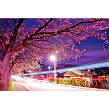 Frameless DIY Painting By Numbers Stree Landscape PinkTree By Numbers For Adults Modern Wall Art Decors Handpainted Diy Gift Art