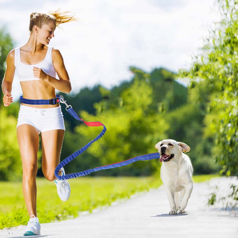 Hands Free Dog Leash Adjustable Waist Belt for Jogging Hiking Running Walking Dog Lead Leash Bungee Elastic Pet Traction Rope|Leashes| - AliExpress