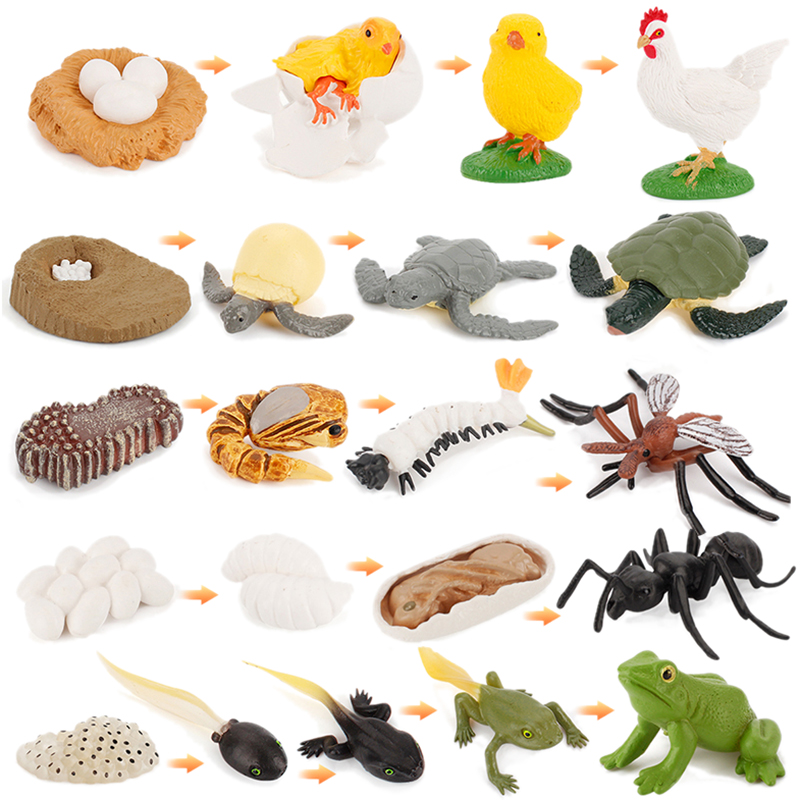 Simulation Animal Life Growth Cycle Model Ant Turtle Action Figure Educational Toys Rooster Mosquito Frog PVC for Children Kids image