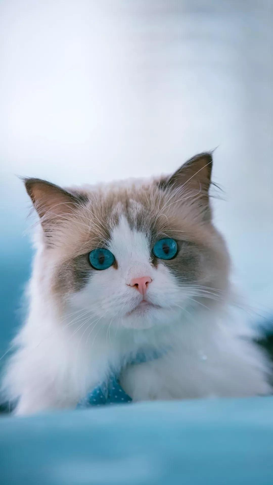 猫片壁纸 :生活不断拍打我们的脸皮,最后不是脸皮厚了,是肿了!插图47