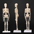 45 см анатомический модель анатомии человека медицинская модель скелета узнать помощи Анатомия скелет человека модель оптом и в розницу