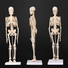 45cm anatomia anatômica esqueleto humano modelo médico aprender ajuda anatomia esqueleto humano modelo atacado varejo