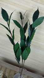 Игольчатая ветка натуральные сухоцветы цветочные ручной работы сохраненные свежими Цветочные украшения Цветочная композиция материал