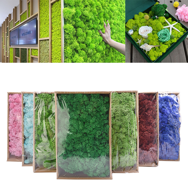 40g Artificial Plant Eternal Life Moss DIY Mini Garden Micro Landscape Accessories Garden Home Decoration Flower Material