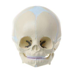 Image 2 - 1: 1 ludzki płodowy niemowlę medyczny czaszka anatomiczny model szkieletu materiały dydaktyczne dla nauk medycznych