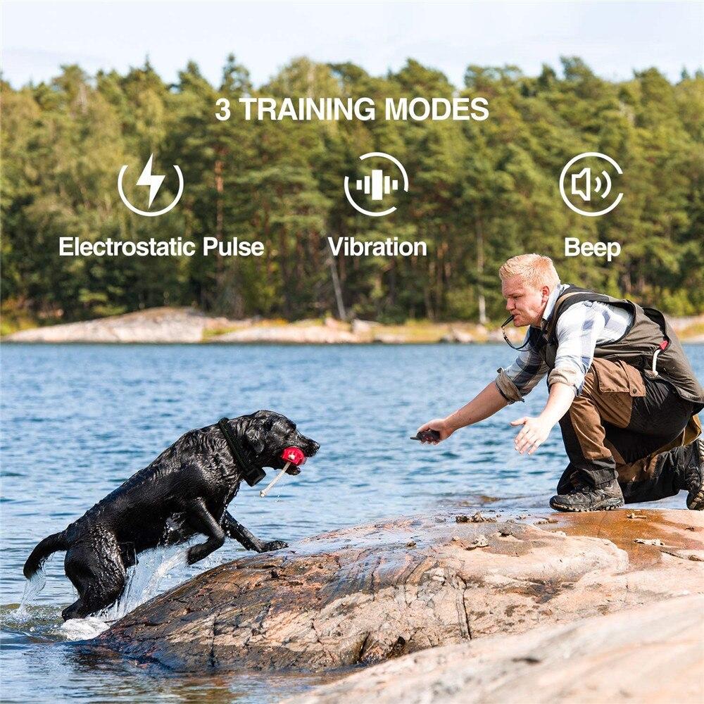 dog training collar-5