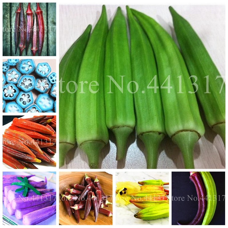 Hot Sale! 100 Pcs Imported Okra Plant Organic Heirloom Vegetable Fruit Outdoor Bonsai Flower Planta For Home Garden Pot Decor