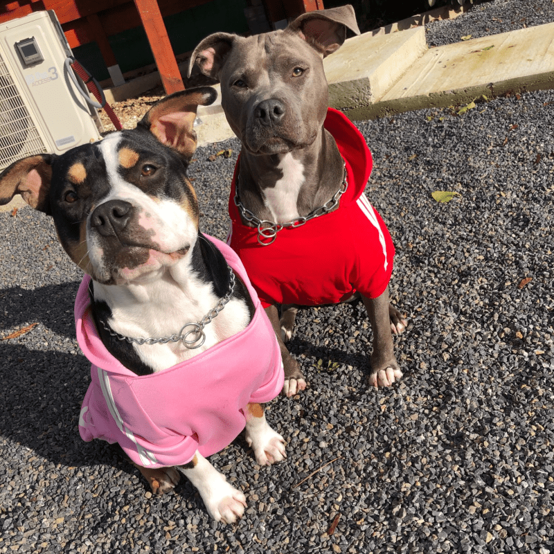 Товары для домашних животных, одежда для собак, пальто, куртка, толстовка, свитер, одежда для собак, хлопковая одежда для собак, спортивный стиль, одежда для собак-4