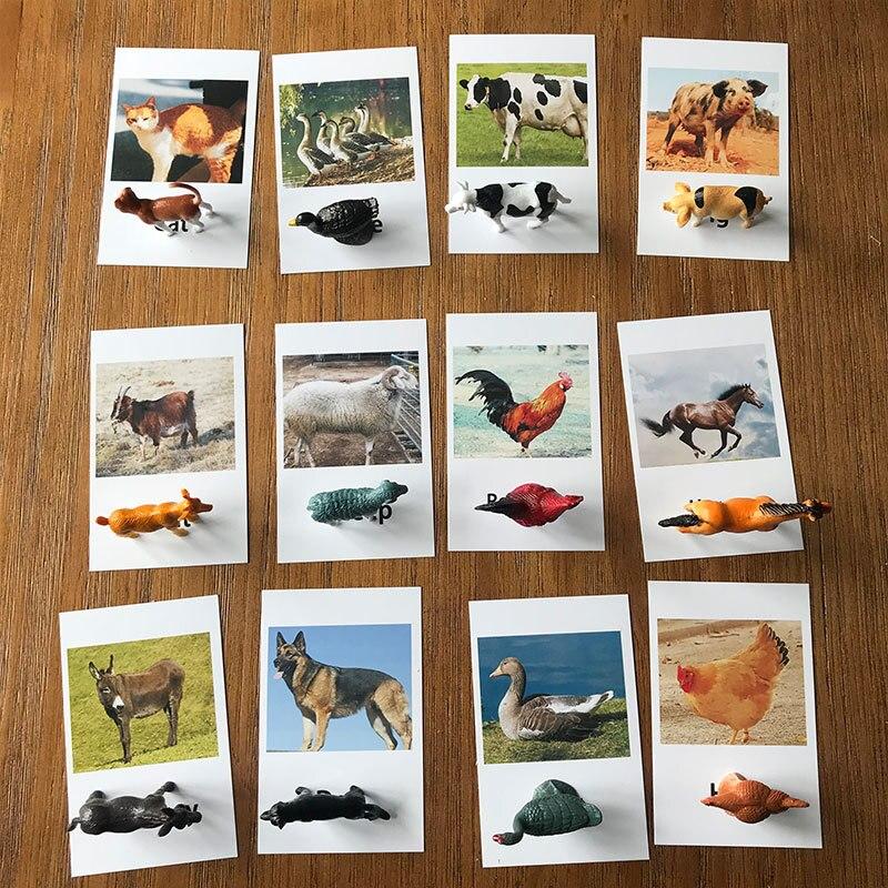 Игрушки Монтессори 24 шт., карты для матча с животными, игра Монтессори для дошкольного обучения, модели птицы, детская игрушка