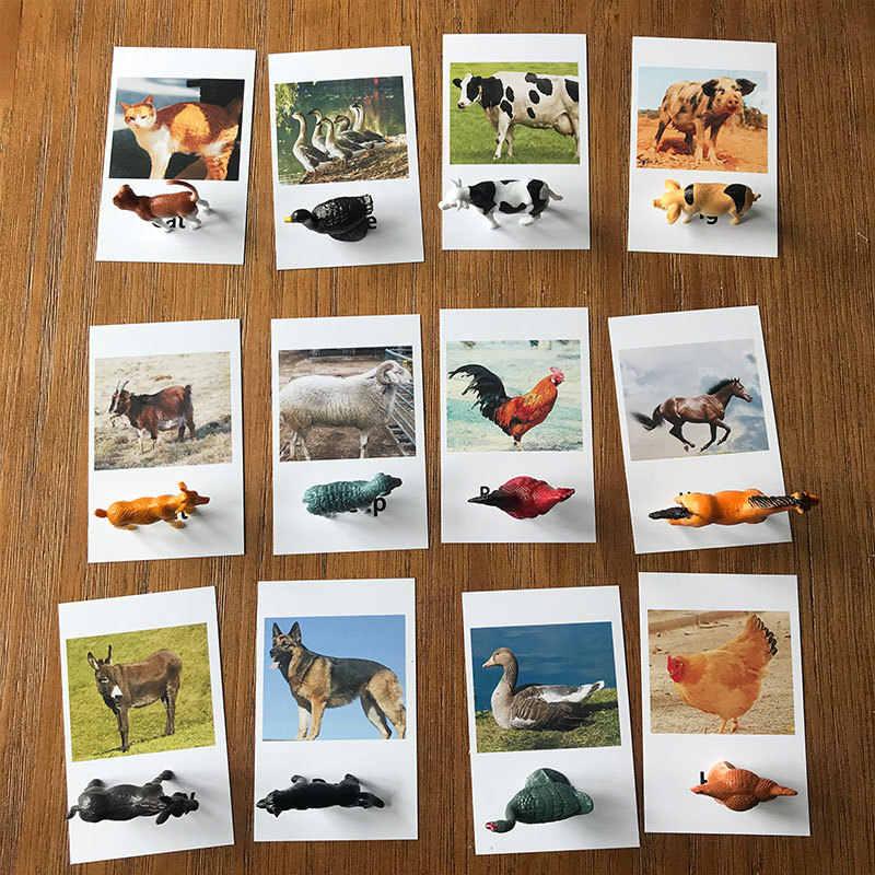 24pcs Montessori Toys Animal Match Cards Matching Game Montessori Preschool Educational Language Learning Poultry Models Kid Toy|Biology|   - AliExpress