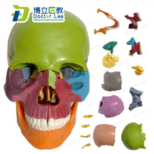 Free Shipping Mini Skull Model 15 Parts Human Anatomy Skeleton Colorful Assembled Toy for Medical and Art Teaching and Learning