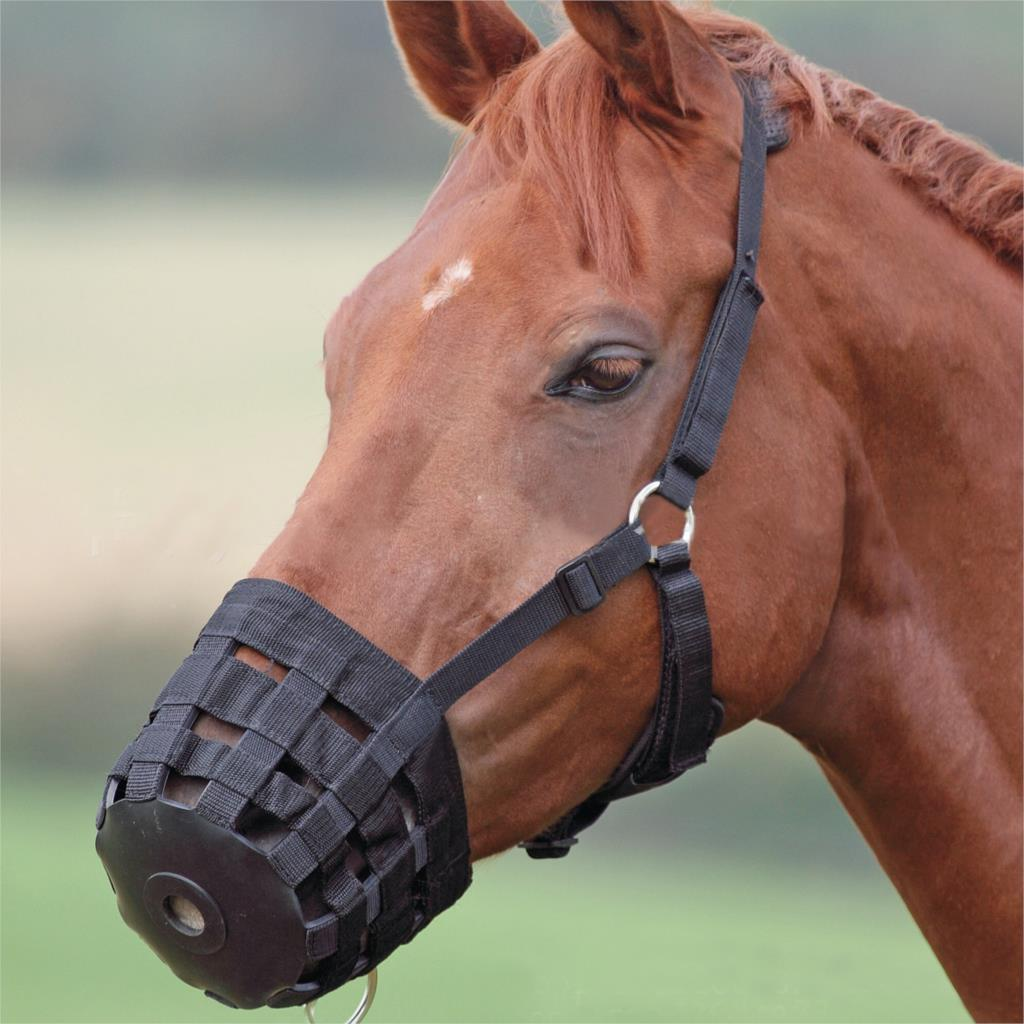 Horses Horses Mouth Cover Rubber PP Webbing