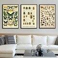 Картина на холсте в винтажном стиле, Постер, образец насекомых, Картина на холсте высокого качества, домашнее украшение без рамки o416