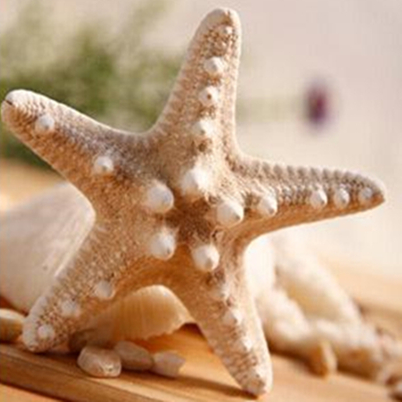 1pc Size 7.5-9cm / 10.5-11cmWhite Starfish Natural Sea Stars Five Finger Home Decoration DIY Craft Beach Cottage Wedding Decor