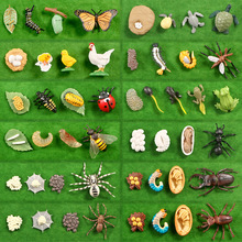 Simulation Animals Growth Cycle Butterfly,Ladybug,Chicken Life Cycle Figurine Plastic Models Action Figures Educational Kids Toy