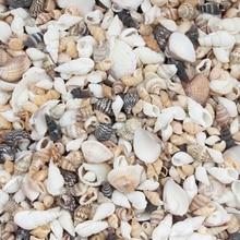 20 г Смесь натуральных морских ракушек пляжный декор ремесло Diy морской стиль аквариум ракушек украшение