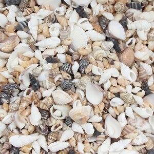 20 Gram Mix Natural Sea Shells Conch Coquillage Beach Decor Craft Diy Marine Style Fish Tank Seashells Conch Embellishment