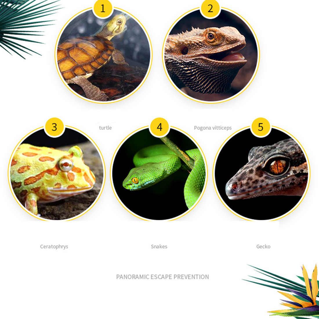 20X20X16 Reptil Terarium Mendaki Hewan Peliharaan Makan Kotak Stackable Beetle Laba-laba Peternakan Wadah dengan Horned Lizard Lumpur makan Pot
