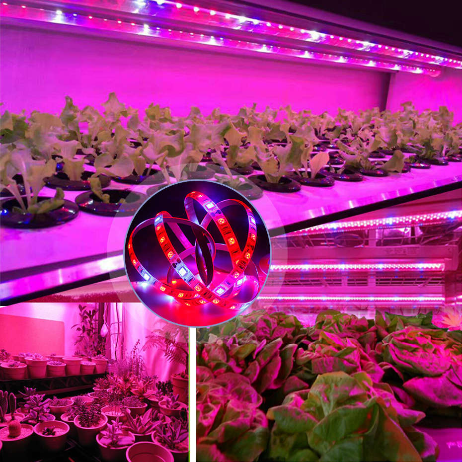 5m Waterproof Full Spectrum Plant LED Grow Light Hydroponics Greenhouse  Indoor LED Plant Growth Lamp Strip SMD 5050 60 leds/m|LED Grow Lights| -  AliExpress