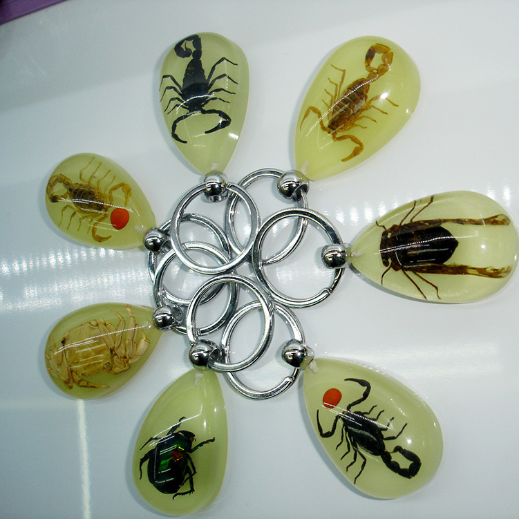 bamboo beetle Real Insect Keychain in the clear acrylic,glowing in the dark