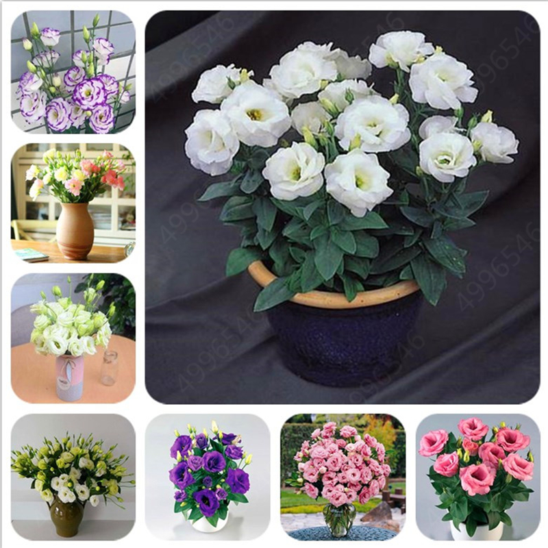 2019 Hot Sale! 100pcs Dwarf Eustoma Bonsais Spring Sowing Autumn Bonsais Indoor Flowers Balcony Potted Wedding Decoration