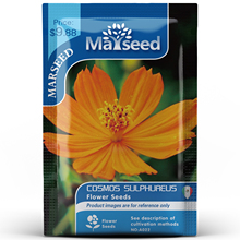 American Heirloom MARSEED Cosmos Sulphureus Flower  Seedsplants Seedling Garden Outdoor