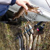 SEALURER Galleggiante Da Pesca Wobbler VIB Lure 5 centimetri 9G Mosca Artificiale Pesca Crankbait Hard Bait Jerkbait Affrontare 5 di colore disponibile 1Pcs