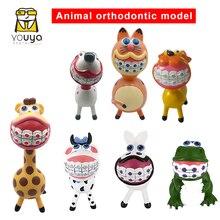 Interesting Animal Models Of Dental Orthodontics Teeth Handicraft Dentist Gift Dental Hospital Or Clinic, Decoration  Furnishing