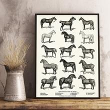 Caballo raza tipos de impresión caballo ecuestre arte cartel granja pared decoración, tabla de caballos Vintage pared arte lienzo pintura imagen
