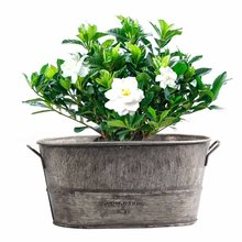 Горшок для садового растения декоративные Винтаж сочные ящик