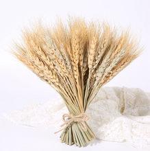Verdadeiro coelho cauda grama pampas trigo orelha flor decoração natural flores secas de para festa de casamento diy artesanato scr