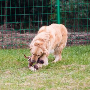 Image 5 - ANSINPARK śliczne zabawki pluszowe pisk zwierzęta domowe są wilk królik wypchanych zwierząt pies do żucia gwizdek piskliwy owinięte wiewiórka zabawki dla psów p999