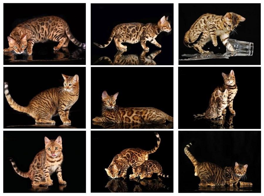 5D DIY Diamond Embroidery Cross Stitch Diamond Painting Mischievoui Cat Animal Rhinestone Needlework Home Decoration Gift