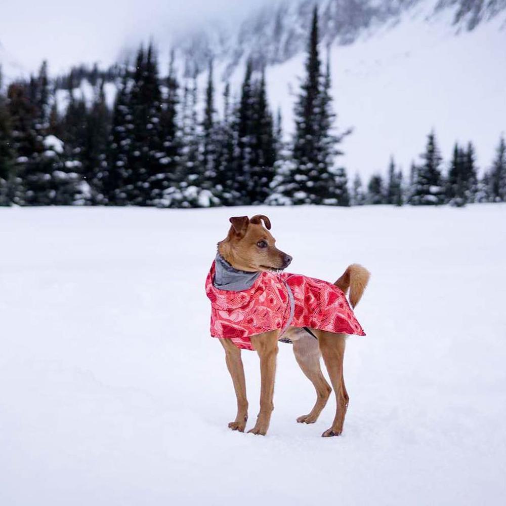 Одежда для собак, зимнее теплое ветрозащитное пальто, утепленная одежда для домашних животных, костюм для собак, комбинезон, куртка, лыжный костюм, товары для домашних животных, собак-1