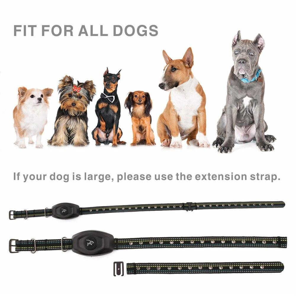 dog training collar-6