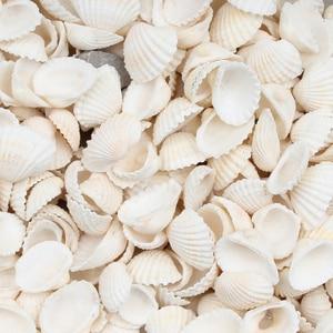 30pcs White Natural Sea Shells Coquillage Beach Decor Craft Diy Marine Style Fish Tank Seashells Conch Embellishment 20-30mm