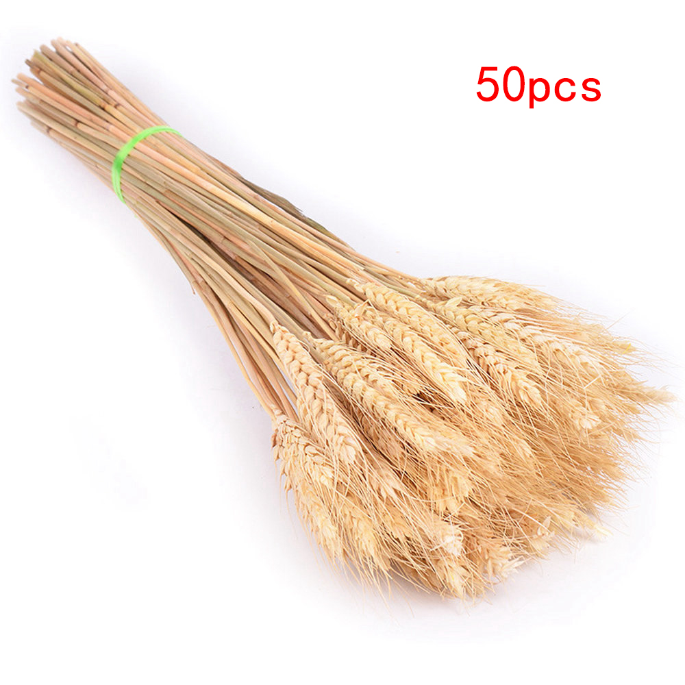 50pcs-Beige-50cm