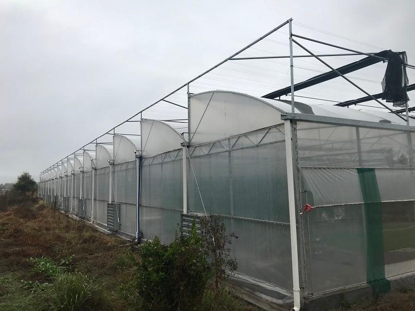 广东育苗大棚,花卉育苗大棚