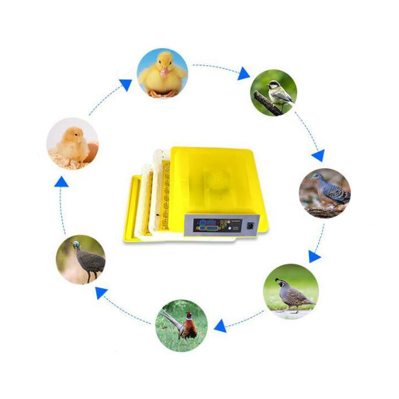 Newest Digital Egg Hatching Incubator With Temperature Alarm/Humidity Alarm For Birds 4