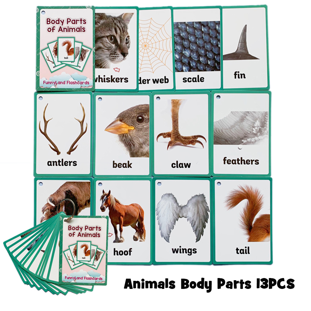 Animals Body Parts English Learning Word Pocket Card English Flashcard Educational Toys Children's Memory Puzzle Game Kids Gifts