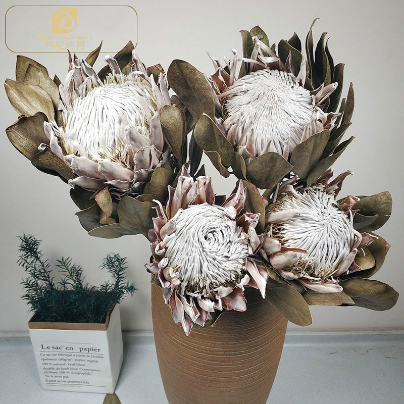 Natural Dried Flowers Emperor Flower Real Floral Dried Branch Wedding Decoration Accessories title=