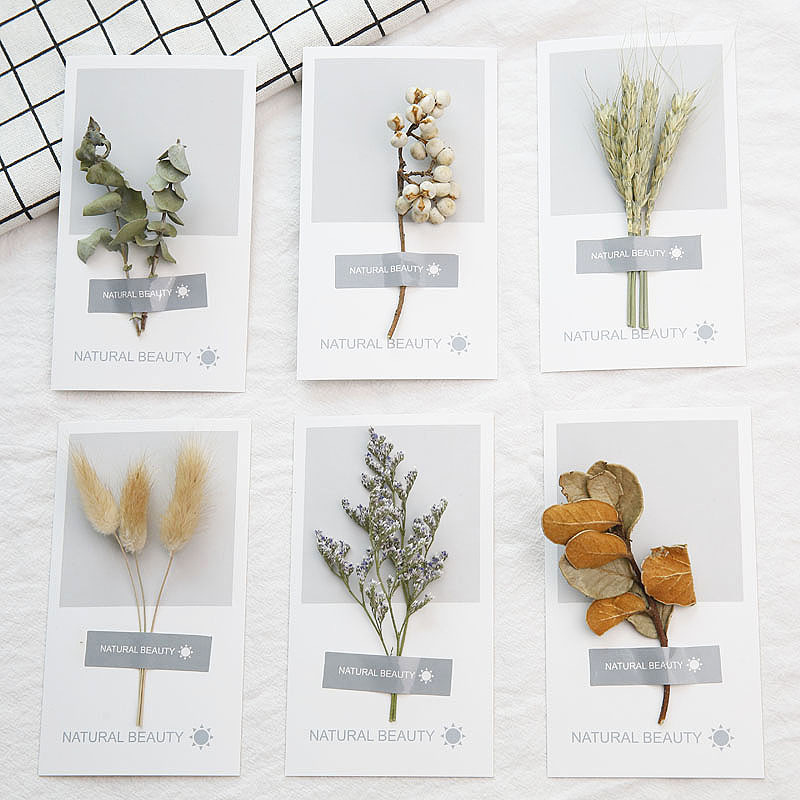 14x8cm Dried Flower Plant Card Valentine's Day Gift Blessing Birthday Creative Card Photo Wall Booth Props Party Decoration