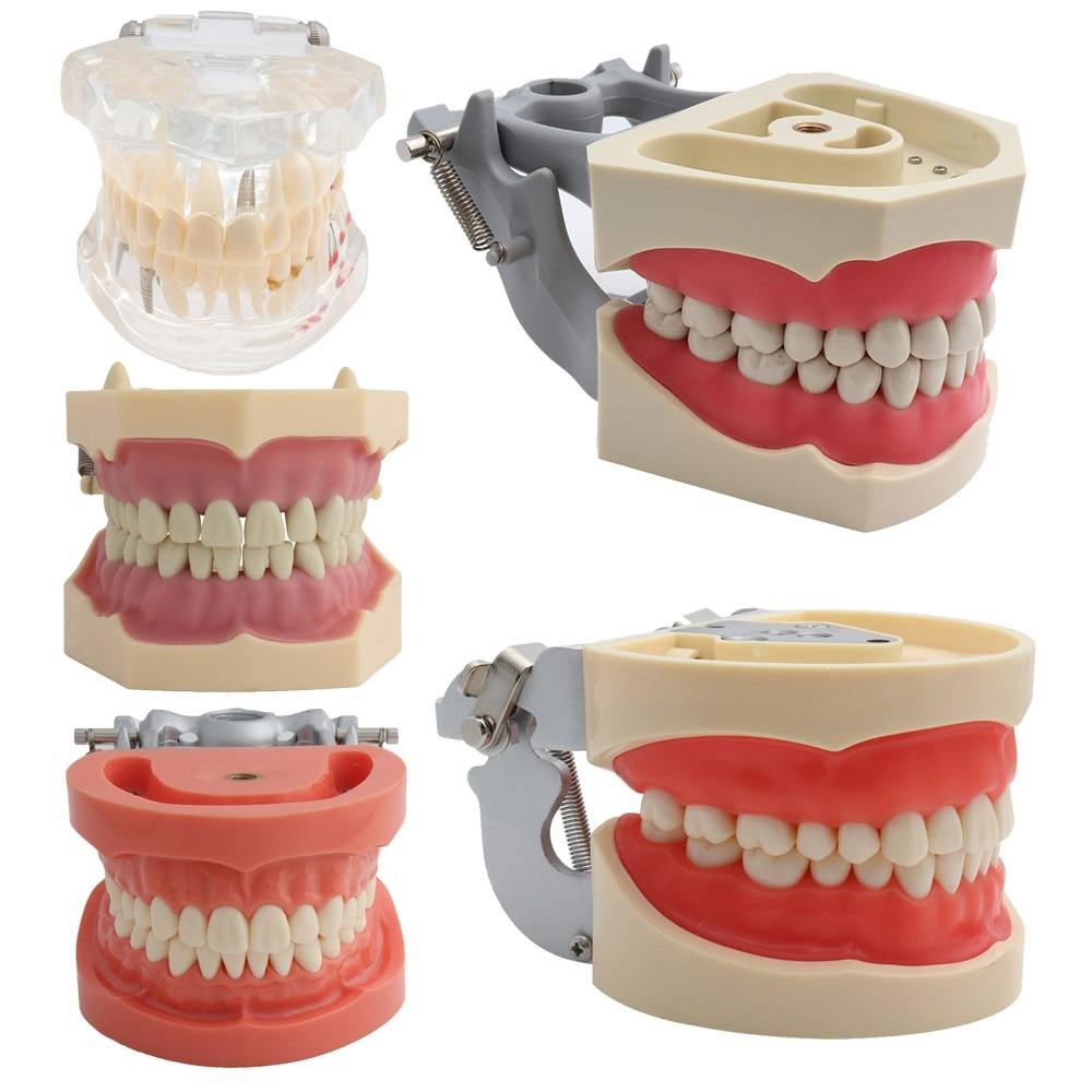 Modelo dental dentes modelo modelo de ensino dental modelo padrão com 32 parafuso-em dentes demonstração goma dura macia 28 24 dentes