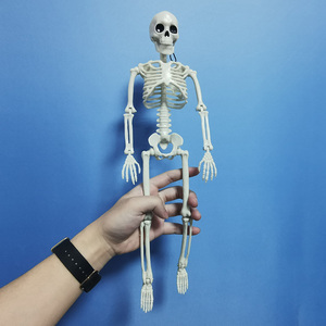 Image 5 - 5 Pcs Menselijk Anatomie Skelet Skelet Model Medische Geneeskunde Leermiddel Anatomie 1 Paar Schedel Skelet Hand Bone Halloween