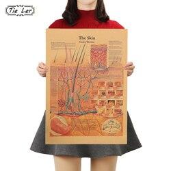 Галстук; Ретро кожи человеческого тела Структура схема поверхность кожи нерва схема плакат домашний декор из крафт-бумаги настенная бумажн...