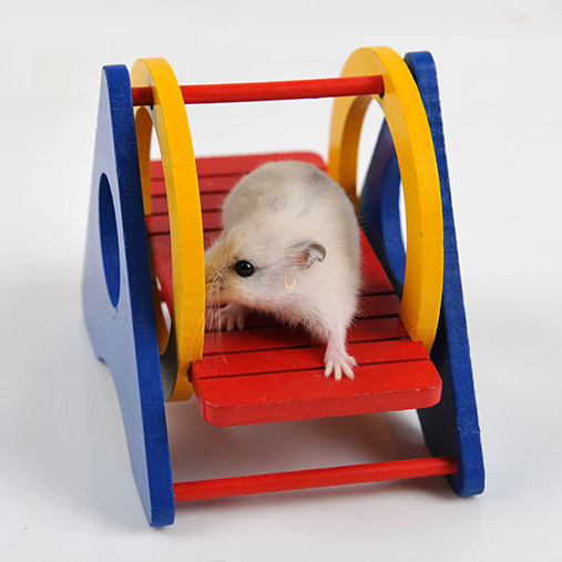 font b Pet b font Toy Hamster Rainbow Swing Seesaw Fun Wooden Hamster Play Toys