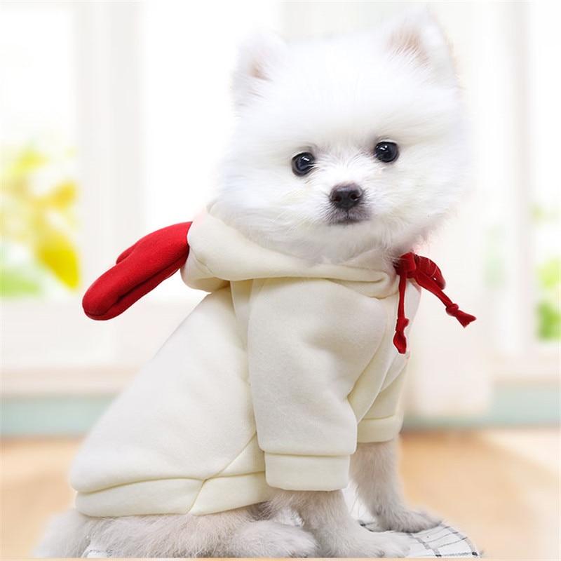 Köpek kazak