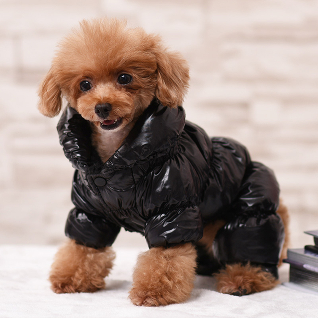 Dog Winter Metallic Coat  3