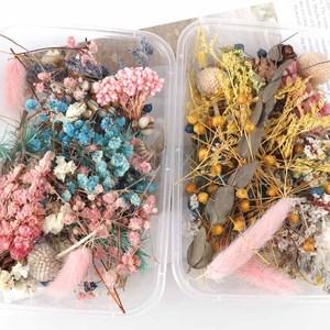 Image 2 - אקראי 1 תיבת יותר מ 8 סגנון לערבב פרח לחוץ יבשה יבש עלים צמחים עבור נייל אמנות Decors תכשיטי ביצוע אביזרי DIY
