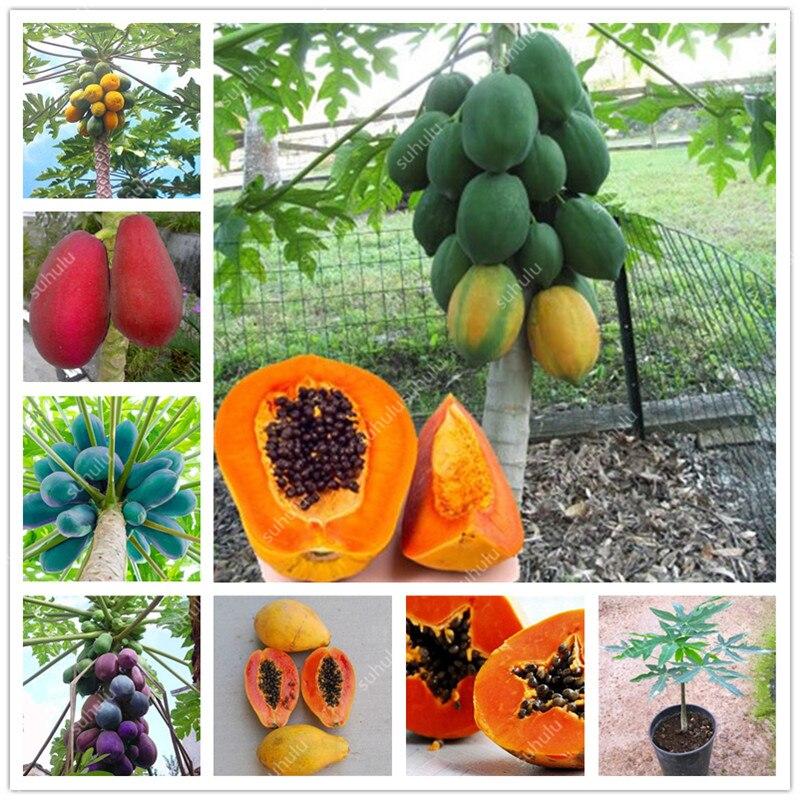 20 Pcs Artificial Papaya
